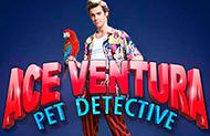 Вулкан онлайн и автомат Ace Ventura